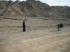 Beduīns 15