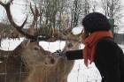 Gulbenes rajona Stradu pagastā atrodas šķirnes briežu dārzs «Mežsētas», kur staltbriežus un mežacūkas var gan redzēt klātienē, gan pabarot no rokas 1