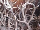 Briežu dārzs «Mežsētas» 24