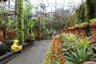 Travelnews.lv kopā ar «365 brīvdienas» un «Turkish Airlines» iepazīst tropu botānisko dārzu «Nong Nooch Tropical Garden» 3
