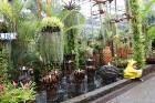 Travelnews.lv kopā ar «365 brīvdienas» un «Turkish Airlines» iepazīst tropu botānisko dārzu «Nong Nooch Tropical Garden» 7