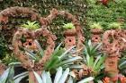 Travelnews.lv kopā ar «365 brīvdienas» un «Turkish Airlines» iepazīst tropu botānisko dārzu «Nong Nooch Tropical Garden» 8