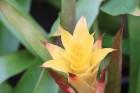 Travelnews.lv kopā ar «365 brīvdienas» un «Turkish Airlines» iepazīst tropu botānisko dārzu «Nong Nooch Tropical Garden» 13