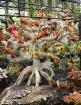 Travelnews.lv kopā ar «365 brīvdienas» un «Turkish Airlines» iepazīst tropu botānisko dārzu «Nong Nooch Tropical Garden» 21