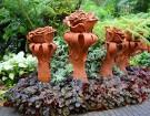 Travelnews.lv kopā ar «365 brīvdienas» un «Turkish Airlines» iepazīst tropu botānisko dārzu «Nong Nooch Tropical Garden» 22