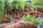 Travelnews.lv kopā ar «365 brīvdienas» un «Turkish Airlines» iepazīst tropu botānisko dārzu «Nong Nooch Tropical Garden» 23