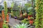 Travelnews.lv kopā ar «365 brīvdienas» un «Turkish Airlines» iepazīst tropu botānisko dārzu «Nong Nooch Tropical Garden» 25