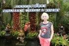 Travelnews.lv kopā ar «365 brīvdienas» un «Turkish Airlines» iepazīst tropu botānisko dārzu «Nong Nooch Tropical Garden» 45