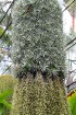 Travelnews.lv kopā ar «365 brīvdienas» un «Turkish Airlines» iepazīst tropu botānisko dārzu «Nong Nooch Tropical Garden» 49