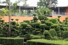 Travelnews.lv kopā ar «365 brīvdienas» un «Turkish Airlines» iepazīst tropu botānisko dārzu «Nong Nooch Tropical Garden» 57