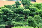 Travelnews.lv kopā ar «365 brīvdienas» un «Turkish Airlines» iepazīst tropu botānisko dārzu «Nong Nooch Tropical Garden» 60