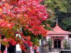 Japānas pilsētā Saporo dabas skaistums mijas ar pilsētas burzmu 12