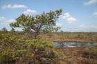 Travelnews.lv kopā ar «Dabas Sporta Zāli» dodas pārgājienā pa Ķemeru Nacionālo parku 52