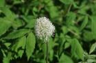 Nacionālais botāniskais dārzs aicina maijā doties nesteidzīgā pastaigā pa ziedošo akmeņdārzu 8
