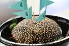 Otrais «Rīgas Burgeru Festivāls 2018» 4.08.2018 noskaidroja ātrāko ēdāju un labāko burgeru 32