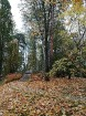 Rīgas parki un dārzi pārklājas rudens zeltā 6