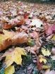 Rīgas parki un dārzi pārklājas rudens zeltā 9