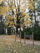 Rīgas parki un dārzi pārklājas rudens zeltā 11