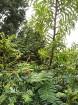 Rīgas parki un dārzi pārklājas rudens zeltā 13