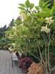 Rīgas parki un dārzi pārklājas rudens zeltā 15