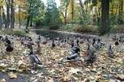 Rīgas parki un dārzi pārklājas rudens zeltā 1
