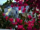 Santorini ir viens no iecienītākajiem romantiķu galamērķiem, kas vilina ar  pārsteidzošām panorāmām, romantiskiem saulrietiem un vulkānisko smilšu plu 13