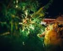 Cēsīs, gaidot Ziemassvētkus, pilsētas iedzīvotāji un viesi pulcējās kopā uz egles iedegšanu, tirdziņos meklēja un atrada gardas dāvanas un klausījās b 29