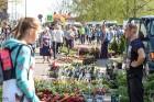 Stādu tirgus Madonas pilsētas centrālajā laukumā jau ir kļuvis par jauku tradīciju un īstu pamudinājumu uzsākt praktiskus pavasara darbus piemājas dār 8