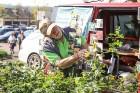Stādu tirgus Madonas pilsētas centrālajā laukumā jau ir kļuvis par jauku tradīciju un īstu pamudinājumu uzsākt praktiskus pavasara darbus piemājas dār 10