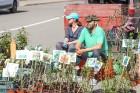 Stādu tirgus Madonas pilsētas centrālajā laukumā jau ir kļuvis par jauku tradīciju un īstu pamudinājumu uzsākt praktiskus pavasara darbus piemājas dār 13