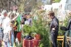 Stādu tirgus Madonas pilsētas centrālajā laukumā jau ir kļuvis par jauku tradīciju un īstu pamudinājumu uzsākt praktiskus pavasara darbus piemājas dār 15