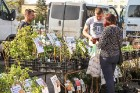 Stādu tirgus Madonas pilsētas centrālajā laukumā jau ir kļuvis par jauku tradīciju un īstu pamudinājumu uzsākt praktiskus pavasara darbus piemājas dār 19