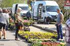 Stādu tirgus Madonas pilsētas centrālajā laukumā jau ir kļuvis par jauku tradīciju un īstu pamudinājumu uzsākt praktiskus pavasara darbus piemājas dār 20