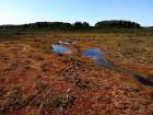 Ziemeļvidzemes biosfēras rezervāts ir vienīgā šāda veida īpaši aizsargājamā dabas teritorija Latvijā, kas aptver 457 600 hektārus sauszemes un 16 750  2