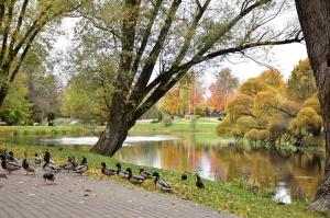 Valmieras pilsēta rotājas rudens zeltā 23