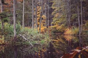 Gulbenē un tās apkārtnē rudens krāšņi izrotājis dabu, ļaujot ikvienam izbaudīt pasakainas ainavas 6