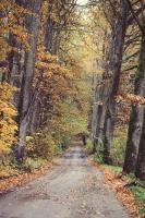 Gulbenē un tās apkārtnē rudens krāšņi izrotājis dabu, ļaujot ikvienam izbaudīt pasakainas ainavas 7